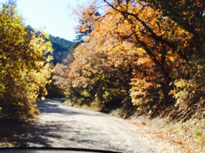 Gravel road colored leaves