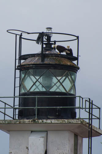 Eagles on lighthouse
