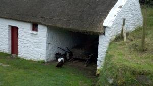Cindy Irish barn with chickens