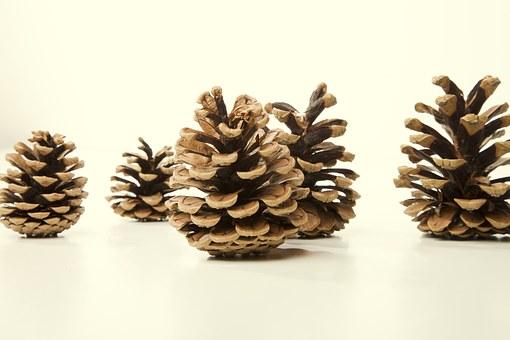 pine-cones-free