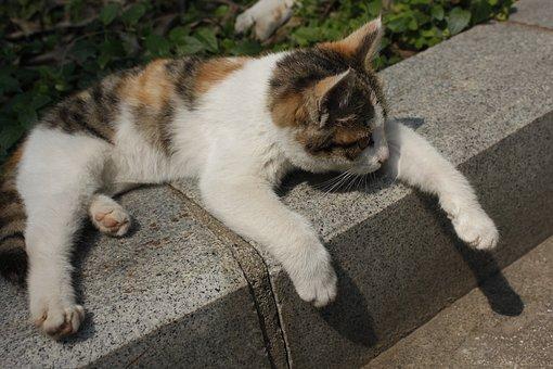 lazy cat free
