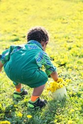 little-boy-in-dandelions free
