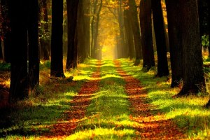 forest path free