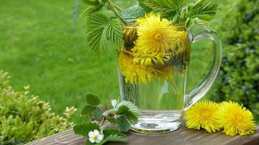 dandelion tea free