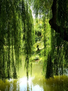 willow2 free