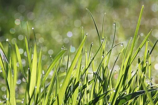 grass n dew free